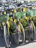 Biciclette per affitto Fotografia Stock