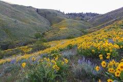 Biciclette su Sage Hills Trail, Wenatchee, Washington Immagine Stock Libera da Diritti