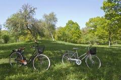 Biciclette sul mwadow Immagine Stock