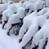 Bicis de la nieve fotografía de archivo