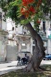 Bicitaxi в старой Гаване Стоковое Изображение
