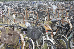 Biclycle parking Stock Image
