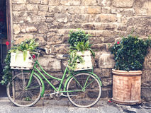 Biclycle verde del vintage con la cesta llena de plantas Fotografía de archivo