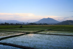 Bicol rice paddies sunset philippines Stock Images