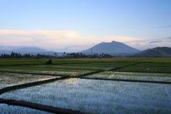 Bicol Rice Paddies Sunset Philippines Stock Images