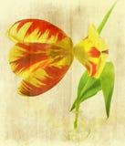 Bicolor Fotos de archivo