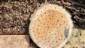 Bicornis selvaggi di Osmia dell'ape sul riparo dell'insetto fatto dei bastoni di legno e di bambù primavera archivi video