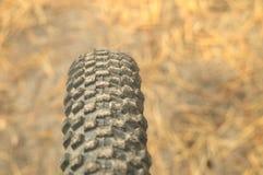 Bicycle внедорожная автошина на предпосылке игл осени на солнечной дороге леса Резиновый горный велосипед протектора колеса Стоковое Изображение RF