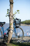 Bicycle. Bike anchored in La Costanera south of Buenos Aires, a walk through nature Royalty Free Stock Photography