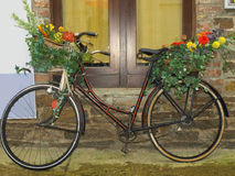 Bicycle. Flowers and plants on a bicycle Stock Images