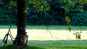Bicycle against a tree Stock Photo