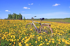 Bicycle amongst dandelion royalty free stock image