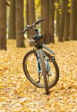 Bicycle on autumn avenue Stock Photo