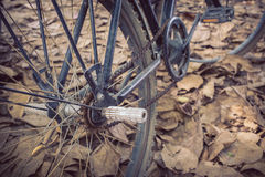 Bicycle and autumn dry leaves fall Stock Image