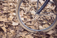 Bicycle and autumn dry leaves fall Royalty Free Stock Images