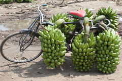 Bicycle with bananas in Africa Royalty Free Stock Photo