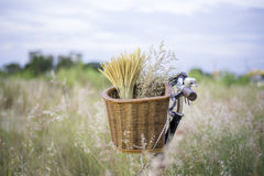 Bicycle with basket and guitar of flowers in meadow Royalty Free Stock Photos