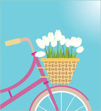 Bicycle basket with tulip flowers. Pink bicycle wicker basket with tulip flowers Stock Image