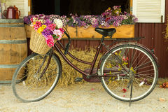 Bicycle. Be filled with basket flowers in Barn royalty free stock photography