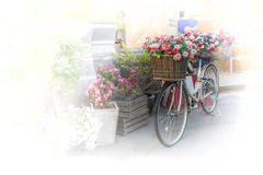 Bicycle. The bike basket with roses with blurred effect Stock Image