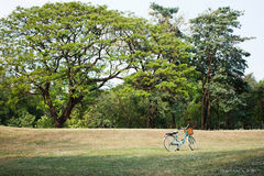 Bicycle or bike in the park Stock Images