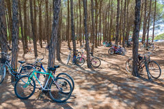 Bicycle bike vehicle park parking tree forest lean. Bicycle bike vehicle park parking lot lean pine spruce tree trunk summer forest photo Stock Photo