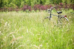 Bicycle in the brushwood Royalty Free Stock Images