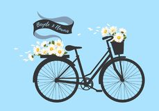 Bicycle with camomile. Illustration of bicycle with basket full of camomile flowers Royalty Free Stock Photo