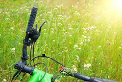 Bicycle in camomile summer field Royalty Free Stock Photo