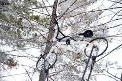 Bicycle. Climbing on trees. Attraction on hight. Winter play and fun royalty free stock photography
