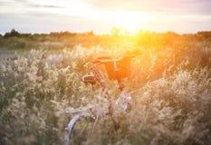 Bicycle com cesta e guitarra das flores no prado Fotografia de Stock
