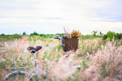 Bicycle com cesta e guitarra das flores no prado Foto de Stock