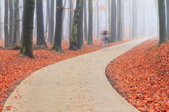 Bicycle concrete in the autumn forest Stock Photos