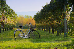 Bicycle. In the countryside at the sunset Stock Images