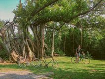 38 - Bicycle Cycling and Men standing under the big banyan tree stock image