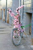 Bicycle decorated with artificial pink flowers Royalty Free Stock Photo