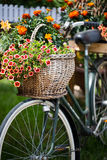 Bicycle decorated with flowers Stock Images