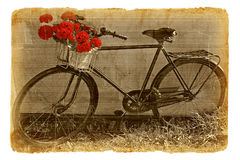 Bicycle decorated by red geraniums Royalty Free Stock Photography