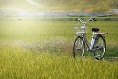 Bicycle in a field, Japan. Bicycle in a field with sunlight, Japan Stock Images