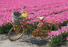 Bicycle in flower field Royalty Free Stock Images