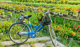 A bicycle in flower gardens, Sa Dec Stock Image