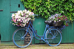 Bicycle with flowers. Old bicycle with flowers in front of a door vegetated with ivy Stock Images