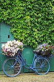 Bicycle with flowers. Old bicycle with flowers in front of a door vegetated with ivy Royalty Free Stock Photos