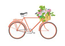 Bicycle with flowers in box. Illustration vector illustration