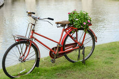 Bicycle and flowers. Royalty Free Stock Images