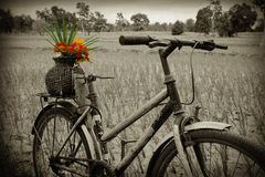 Bicycle and flowers Stock Photography