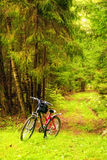 Bicycle in a forest Royalty Free Stock Photography