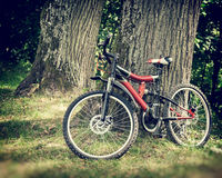 Bicycle in forest Royalty Free Stock Photography