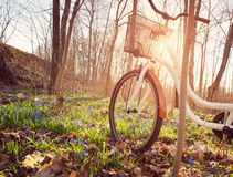 Bicycle in the forest in spring Royalty Free Stock Image