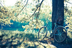 Bicycle  in the forest under the sun. Royalty Free Stock Photography